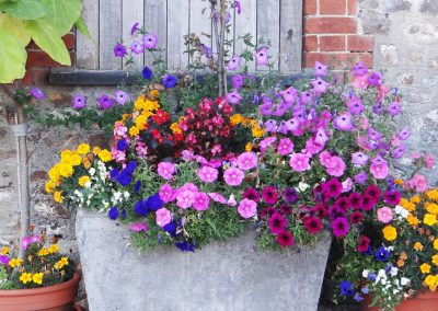 Petulia-flowers-Farwood-Barton-Holiday-Cottages-Colyton-Devon